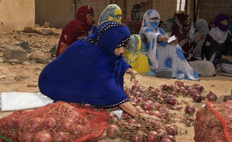 Una misión de la AECID visita los campamentos saharauis de Tinduf